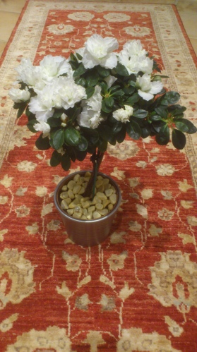 The White Azalea